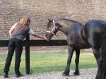 la herghelie - un cal frumos